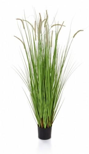 Grass Dogtail