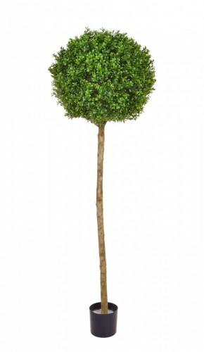 Buxus Ball Tree