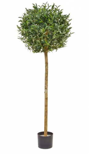 Olive Ball Tree