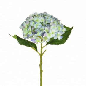 Hydrangea Small Pale Blue